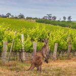 Com'etic réalise AntipodeWines, le site de ventes en ligne de vins naturels d'Australie