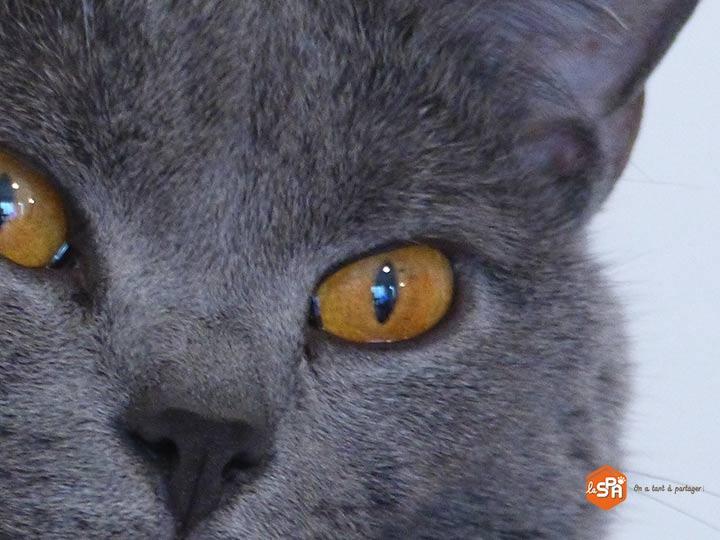Com'etic accompagne a Société Protectrice des animaux (SPA) en amoa Web pour la refonte de son site Internet